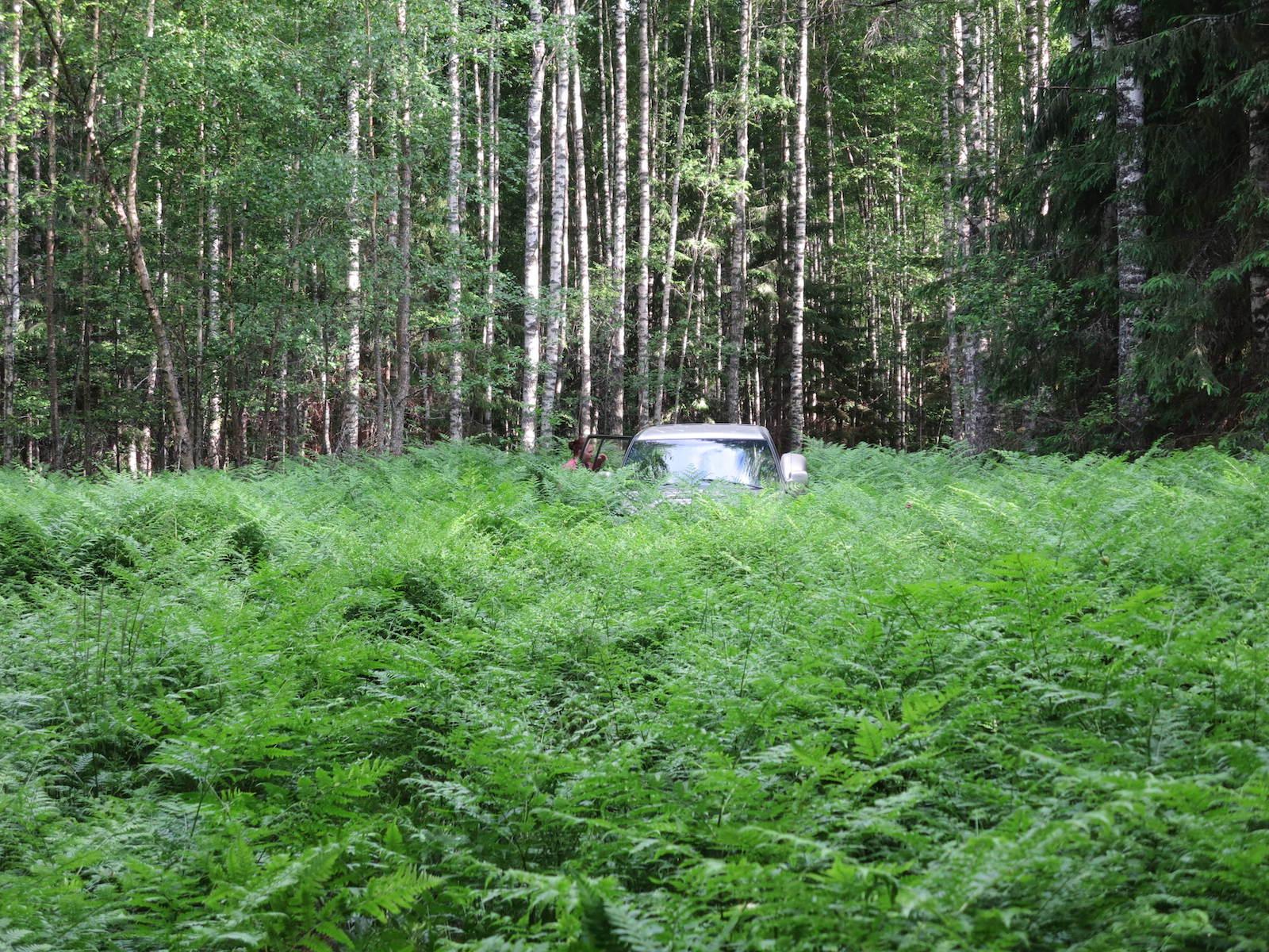 Farnwald mit Auto Belarus Weißrussland