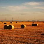 Heuballen Erntezeit Belarus Weissrussland