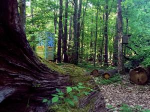 Wald Prypjatsümpfe Belarus Weissrussland