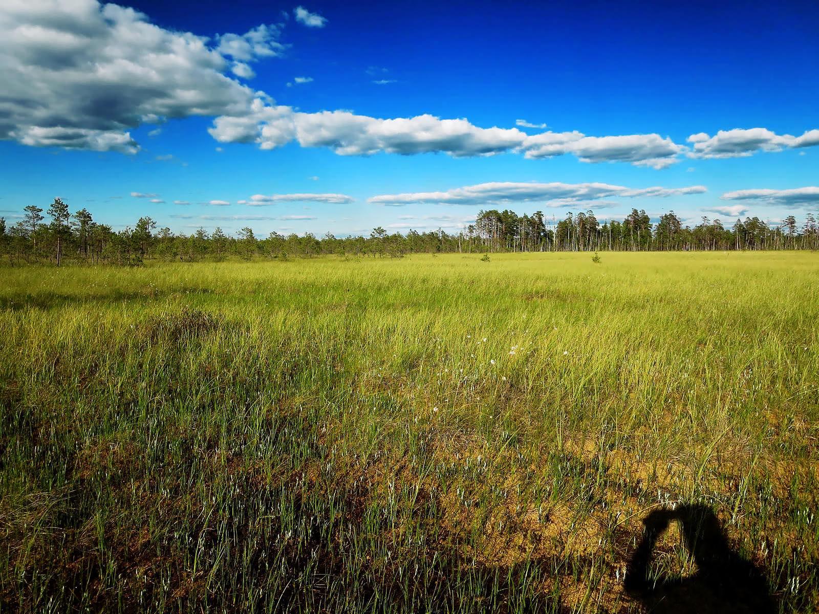 Sommerwiese Belarus Weißrussland