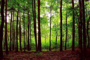 Wald Belarus Weißrussland