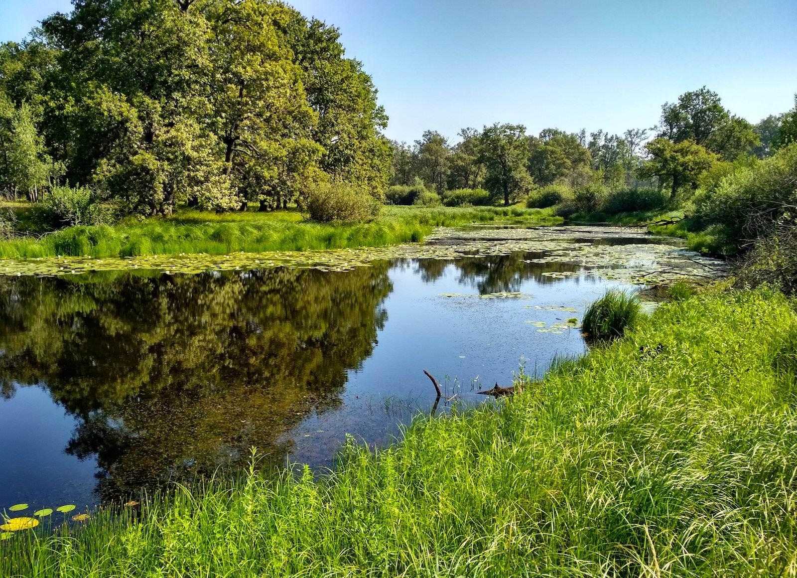Flusslandschaft Polesien Belarus Weißrussland