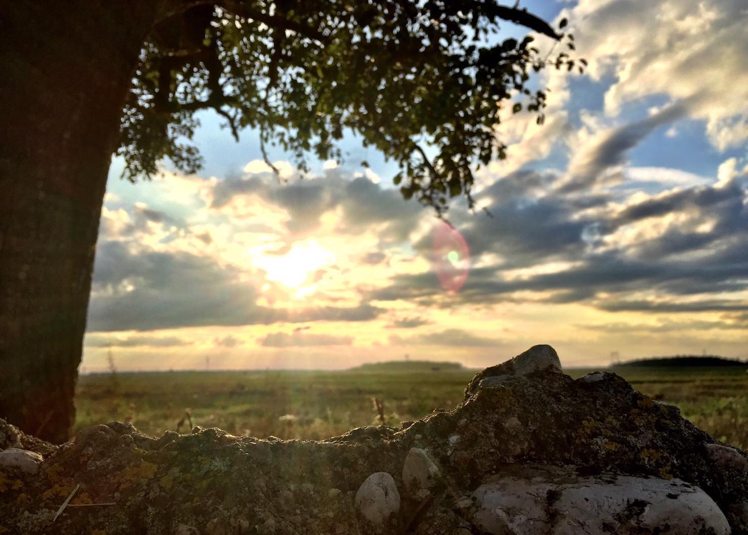 Baum im Sonnenschein Belarus Weißrussland