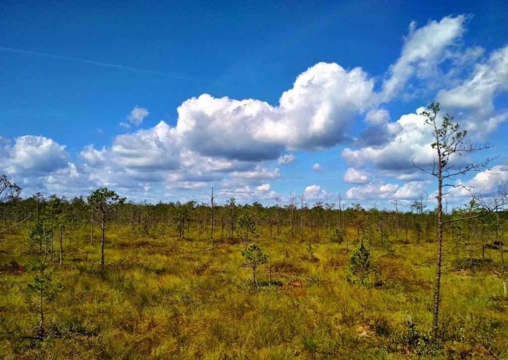 Moorwald in Belarus Weißrussland