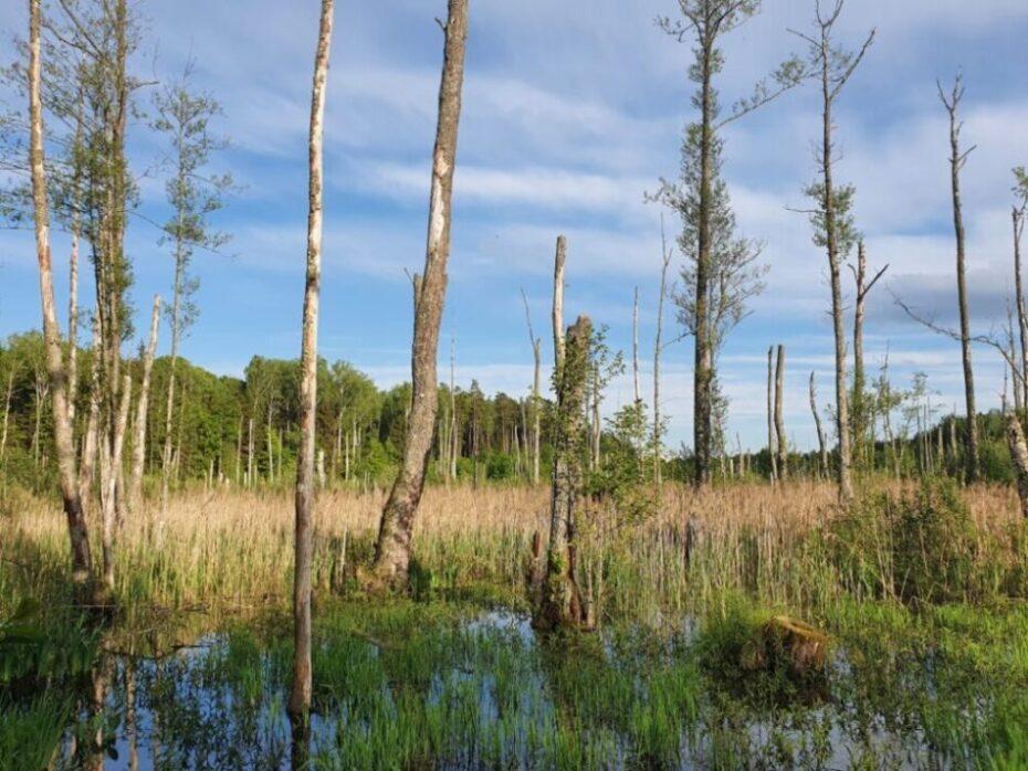 'Verwunschener Sumpf'   Foto: Sveta Abehtikova