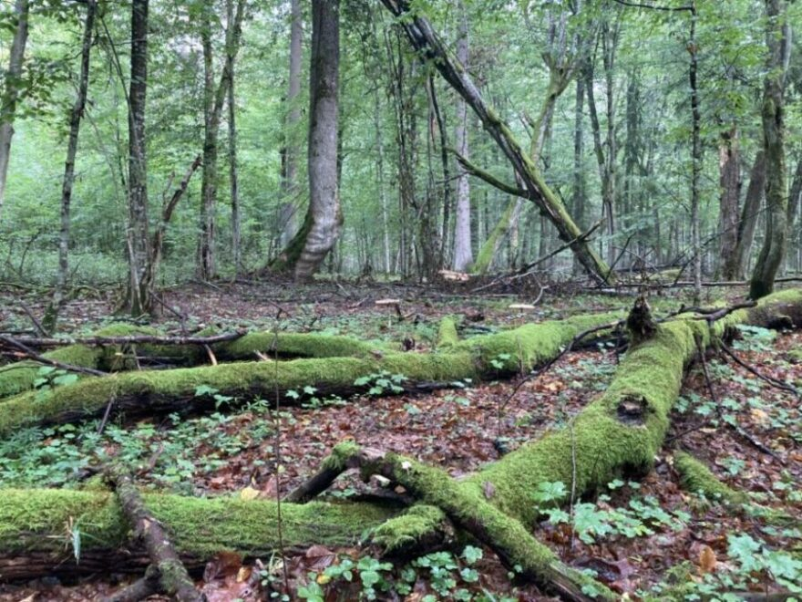Belowescher Nationalpark   Foto: Sveta Abehtikova